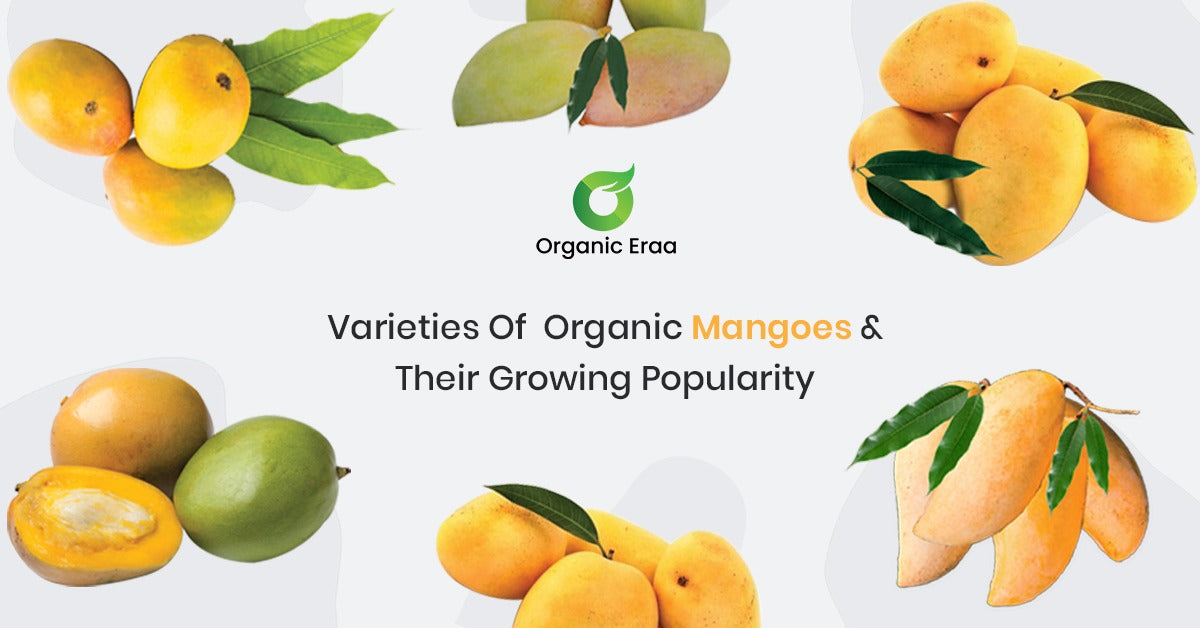 Varieties Of Organic Mangoes & Their Growing Popularity