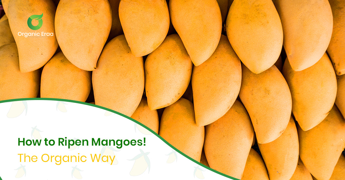 How to Ripen Mangoes: The Organic Way!