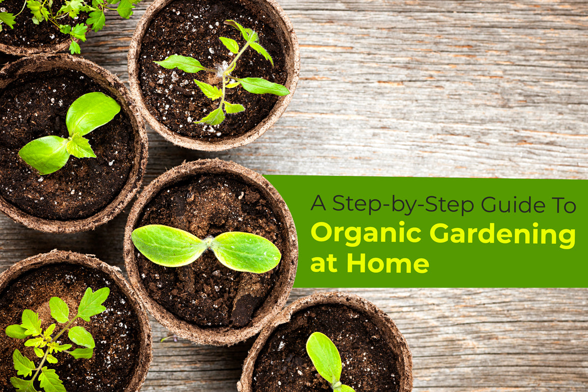 A Step-by-Step Guide To Organic Gardening at Home