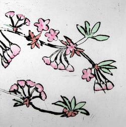 Cherry Blossom - Limited Edition drypoint and watercolour fine art print by artist Richard Spare