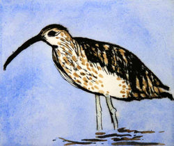 Curlew - Limited Edition drypoint and watercolour fine art print by artist Richard Spare