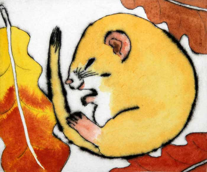 Dreaming Dormouse - Limited Edition drypoint and watercolour fine art print by artist Richard Spare