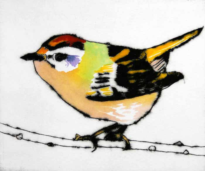 Feisty Firecrest - Limited Edition drypoint and watercolour fine art print by artist Richard Spare