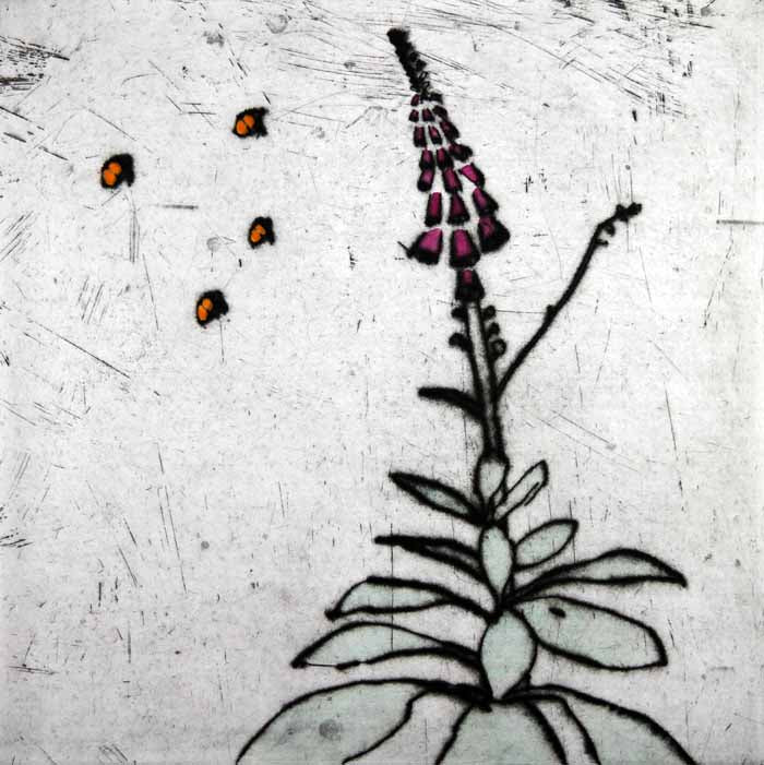 Foxglove - Limited Edition drypoint and watercolour fine art print by artist Richard Spare