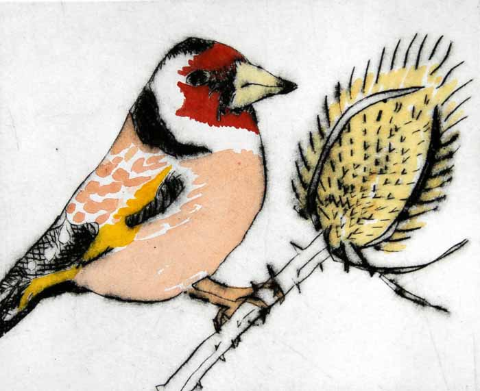 Goldfinch - Limited Edition drypoint and watercolour fine art print by artist Richard Spare