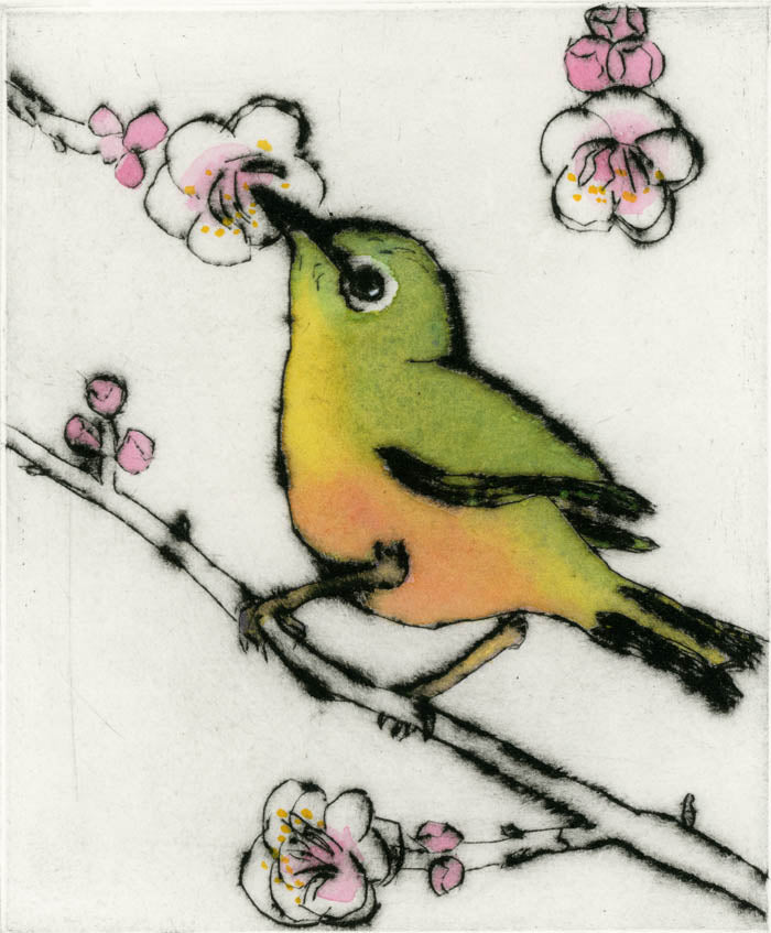 Japanese White Eye - Limited Edition drypoint and watercolour fine art print by artist Richard Spare