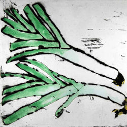 Leeks - Limited Edition drypoint and watercolour fine art print by artist Richard Spare