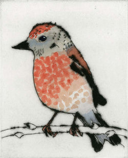 Linnet - Limited Edition drypoint and watercolour fine art print by artist Richard Spare