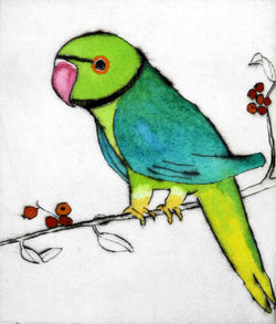 London Parakeet - Limited Edition drypoint and watercolour fine art print by artist Richard Spare