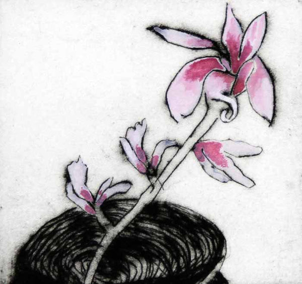 Magnolia - Limited Edition drypoint and watercolour fine art print by artist Richard Spare
