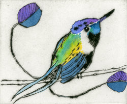 Marvellous Spatuletail - Limited Edition drypoint and watercolour fine art print by artist Richard Spare