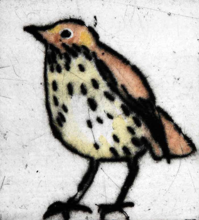 Mr Thrush - Limited Edition drypoint and watercolour fine art print by artist Richard Spare
