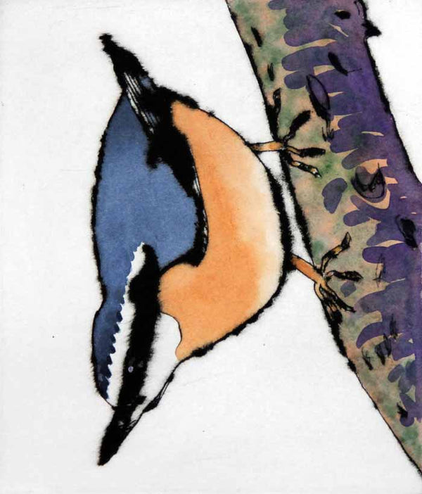 Nuthatch - Limited Edition drypoint and watercolour fine art print by artist Richard Spare