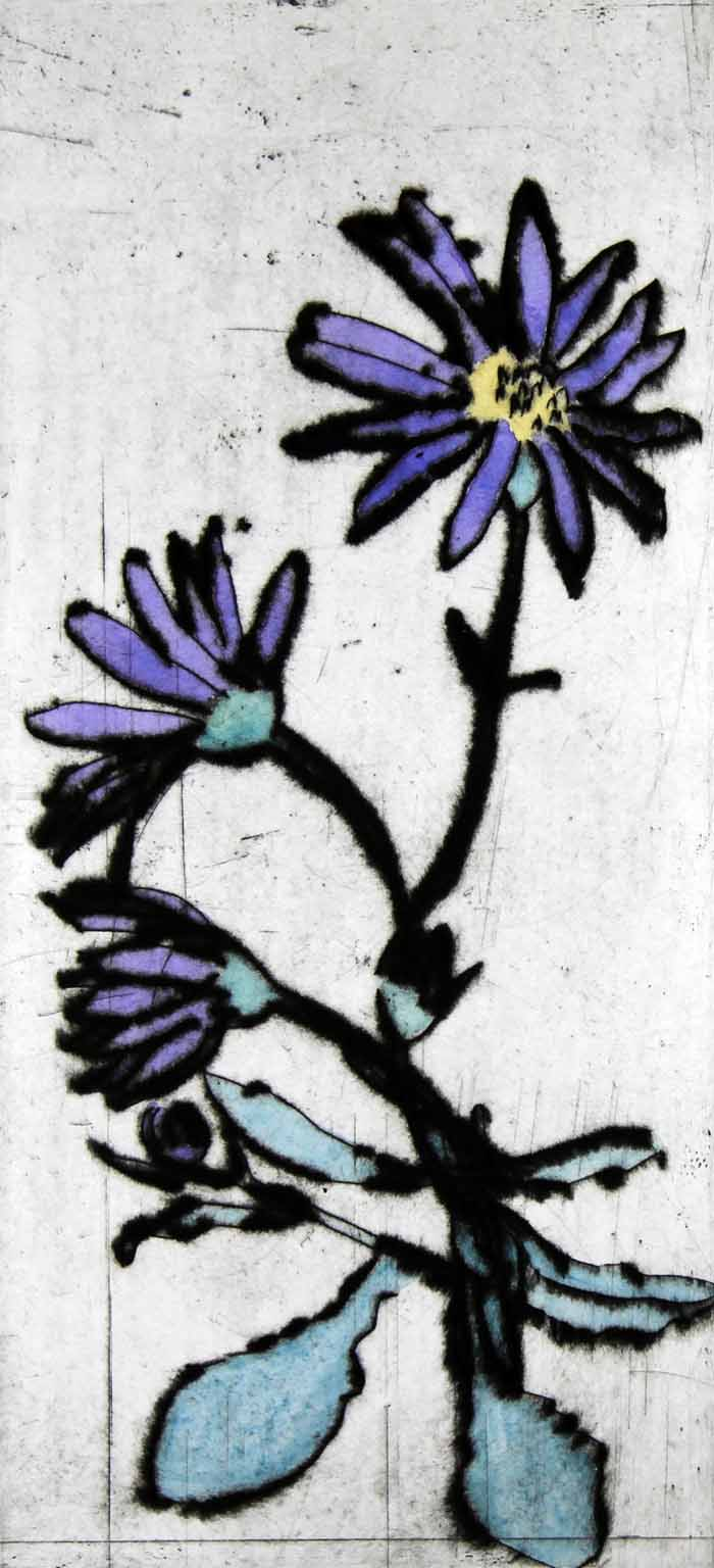 Osteospermums - Limited Edition drypoint and watercolour fine art print by artist Richard Spare