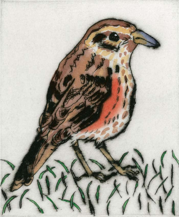 Redwing - Limited Edition drypoint and watercolour fine art print by artist Richard Spare