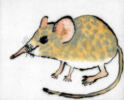 Shrew - Limited Edition drypoint and watercolour fine art print by artist Richard Spare