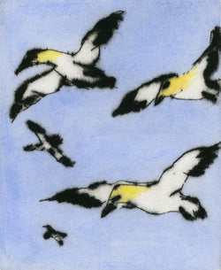 Soaring Gannets - Limited Edition drypoint and watercolour fine art print by artist Richard Spare