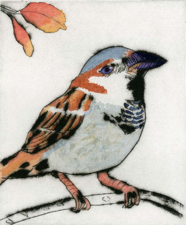 Sparrow - Limited Edition drypoint and watercolour fine art print by artist Richard Spare