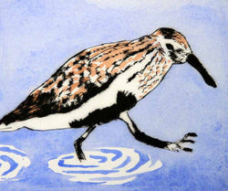 Splish Splash - Limited Edition drypoint and watercolour fine art print by artist Richard Spare