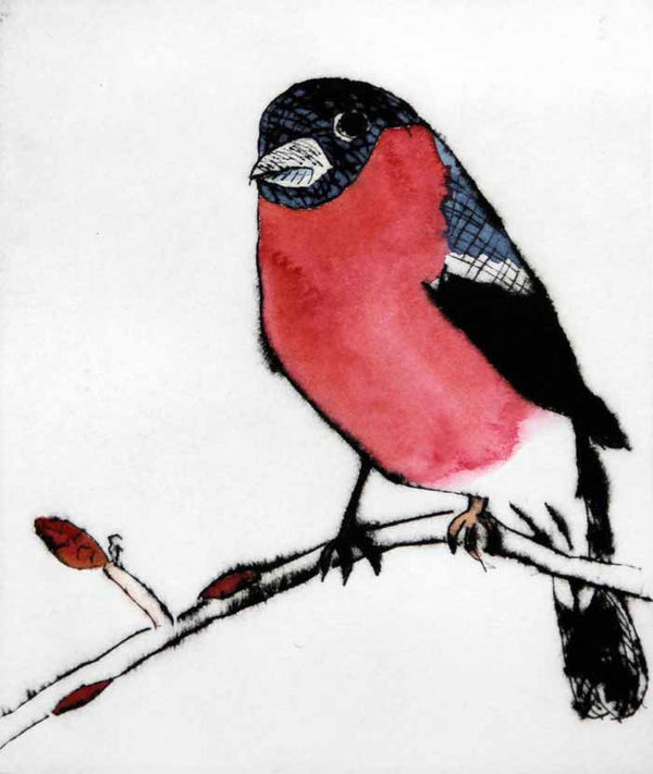Spring Bullfinch - Limited Edition drypoint and watercolour fine art print by artist Richard Spare