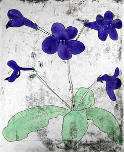 Streptocarpus - Limited Edition drypoint and watercolour fine art print by artist Richard Spare