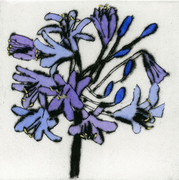 Violet Agapanthus - Limited Edition drypoint and watercolour fine art print by artist Richard Spare