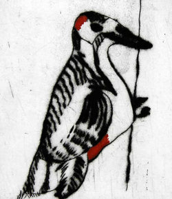 Woodpecker - Limited Edition drypoint and watercolour fine art print by artist Richard Spare