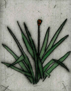 Yucca Leaves - Limited Edition drypoint and watercolour fine art print by artist Richard Spare