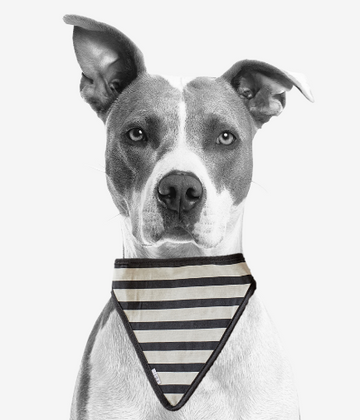 stripe dog scarf