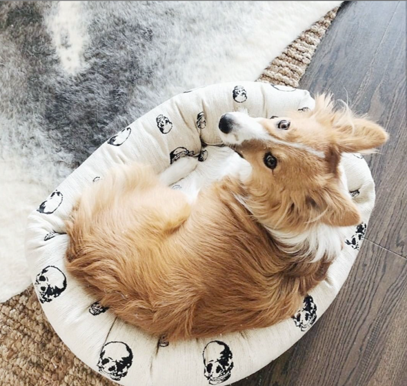 WHITE SKULL DOG BED
