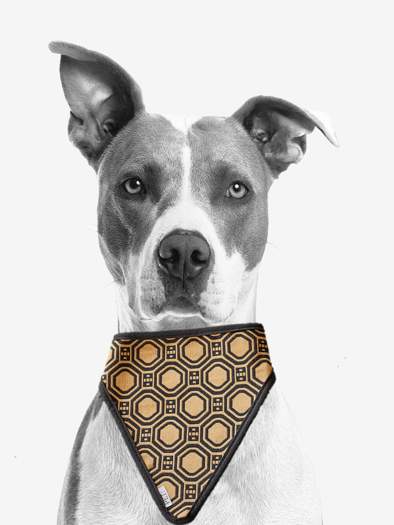 GOLD DECAL PET SCARF