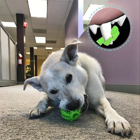 Image of Extra Tough Interactive Elasticity Dog Ball Chew Toy