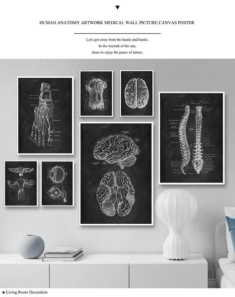 Human Anatomy Artwork Painiting Skeleton Organ Muscle System Canvas Print