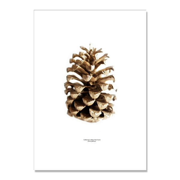 Pine Shell Now Poster Picture Living Room Cuadros Decoracion Home Wall Art Canvas Painting Nordic Poster Wall Decor Unframed