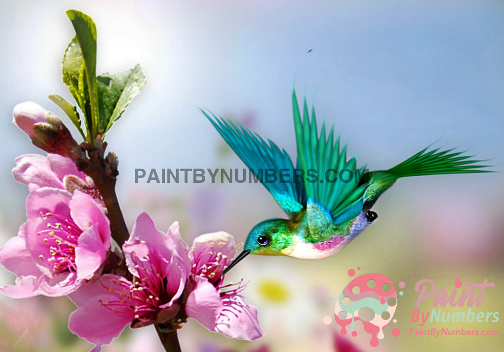 Pretty Hummingbird Paint By Numbers Kit No Frame / 40X50Cm