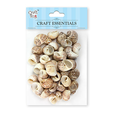 Sea Shells 100gm- Natica Tigrina