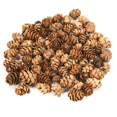 Pine Cone - 1 Inch, 50gm