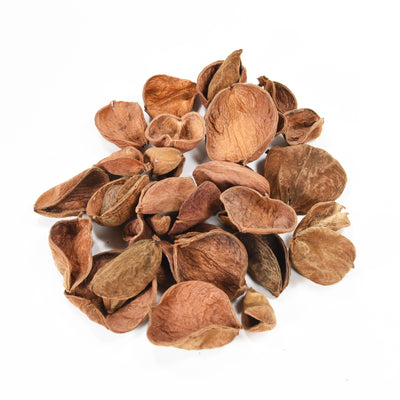Dried Jacaranda Pods - 50gm