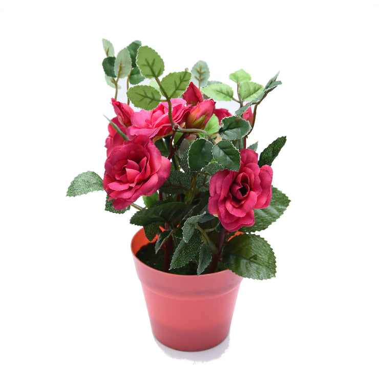 Potted Rose Rose Pink -1Pc