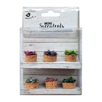 Succulent Patio - 6 Pieces