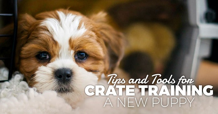 puppy tips for new owner Yelpmart
