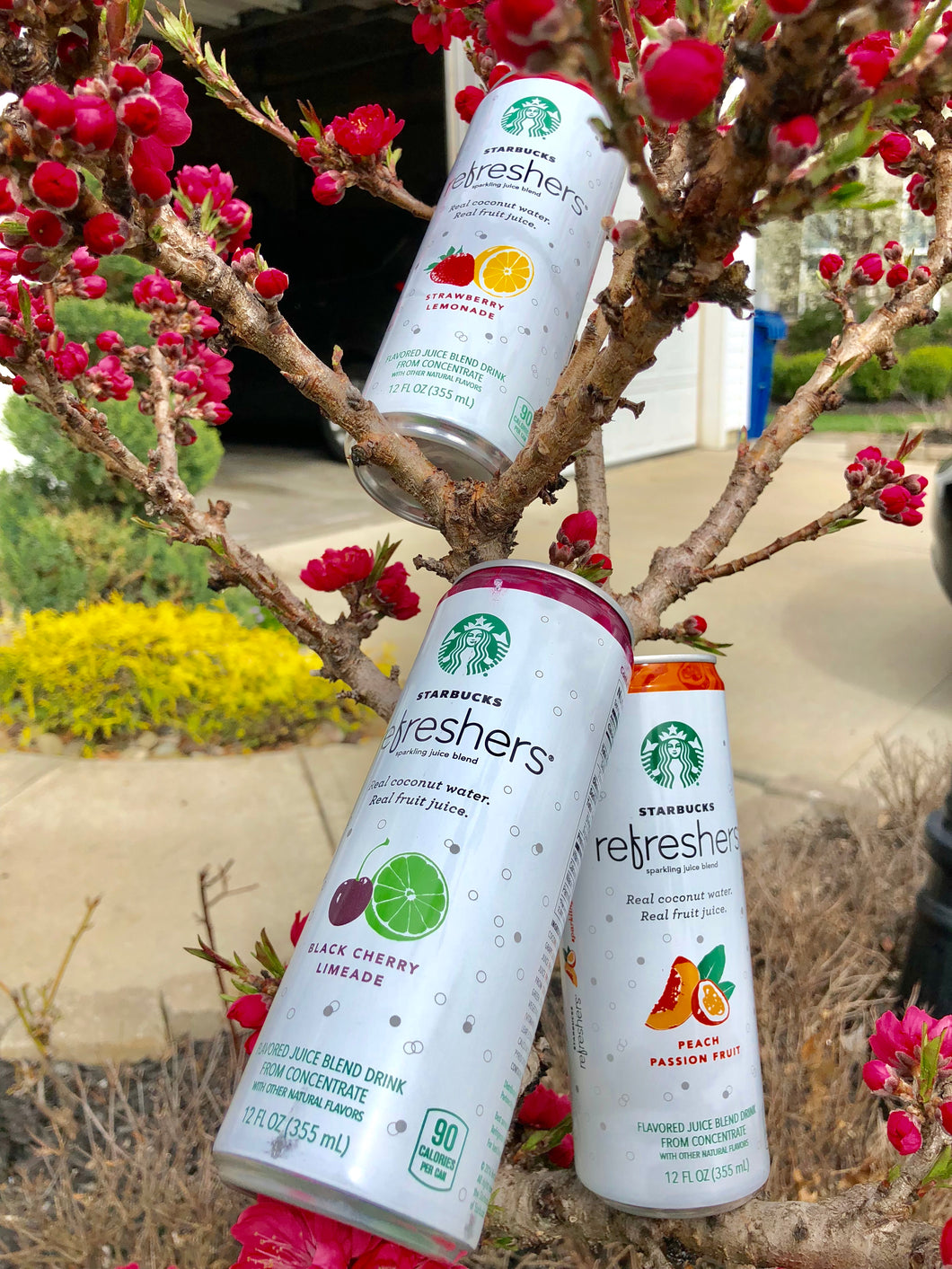 Starbucks Refreshers Sparkling Juice Blends, 3 Flavor Variety Pack with Coconut Water, 12  Fl. Oz, 12 Cans