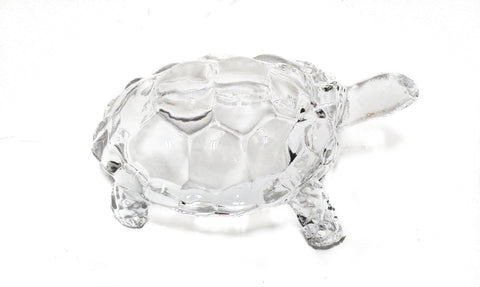 Glass Turtle