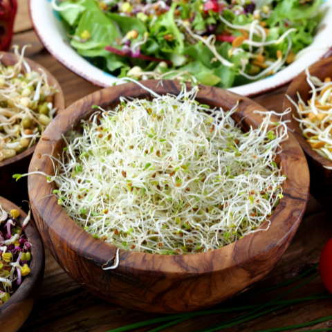 Sprouts Benefits