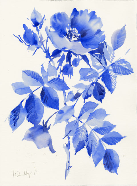 Blue English Rose 3