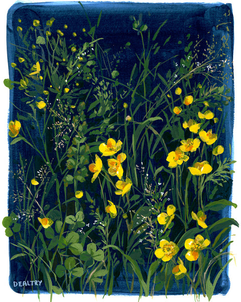 Buttercup 1 - Giclee Print