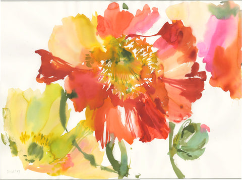 Spring Poppies 2