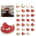 Oral Tissue/Jaw  Models For Practise / FREE Global Delivery
