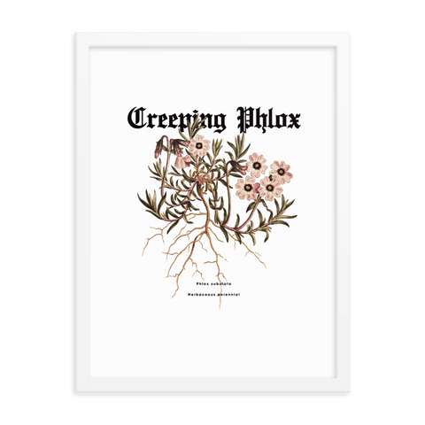 Ripple Creeping Phlox Art Print