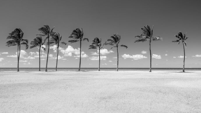 HAWAIIAN BREEZE (B&W)